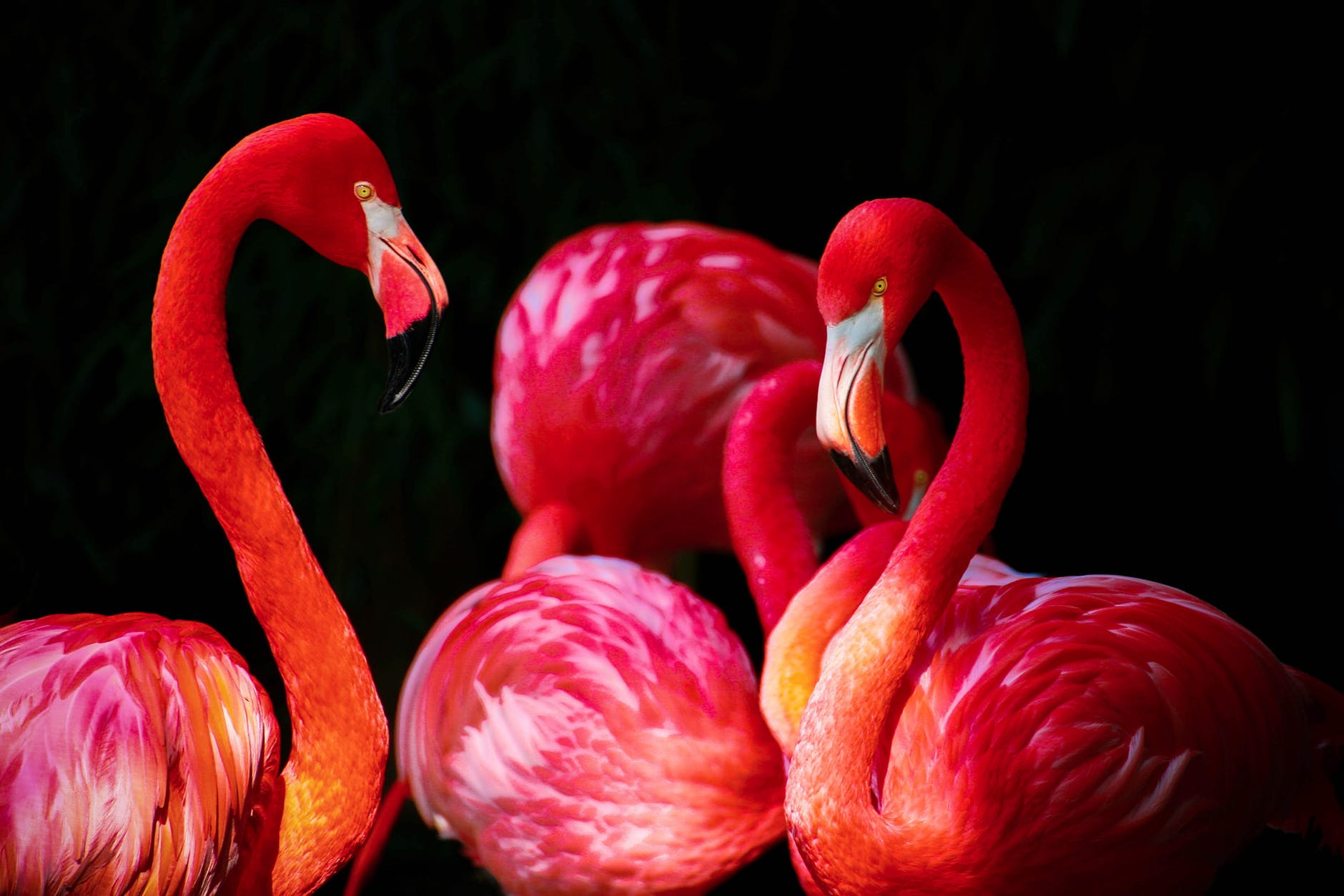 Flamingos are More Fabulous Than You Think